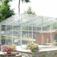 Galvanized Enclosure for Dogs